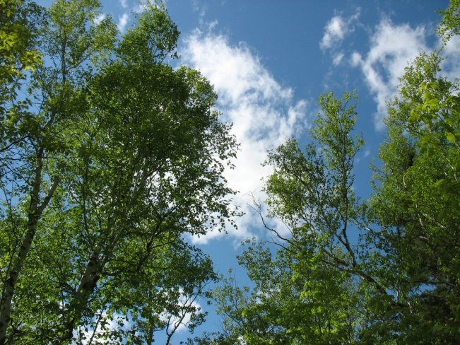 NatureFlex Blog trees